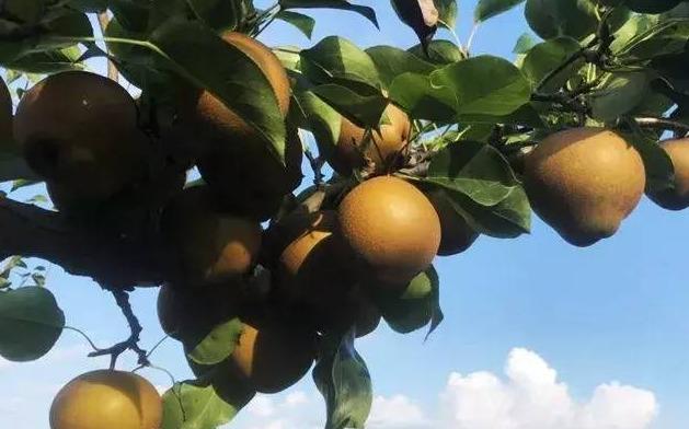 """来自""""中国黄花梨之乡""""的建宁黄花梨,是建宁特产,获中国国家地理标志产品"""